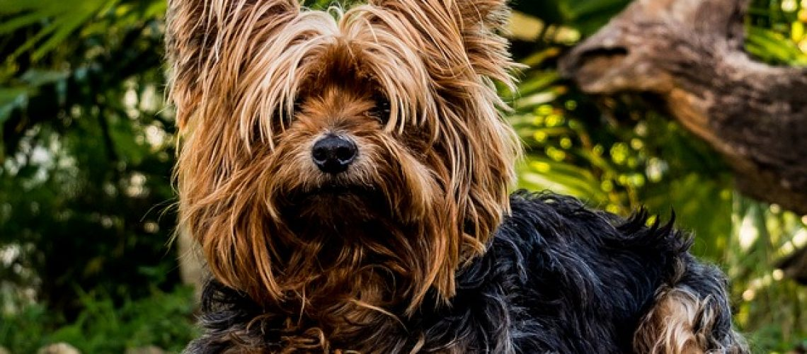 איך בוחרים כלוב הטסה לכלב?