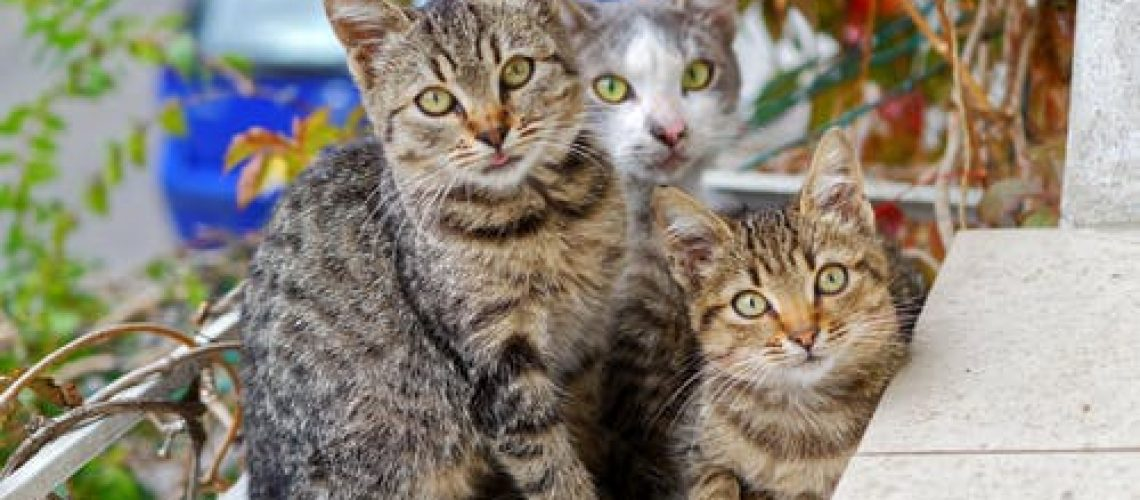 נטורל באלאנס לחתולים