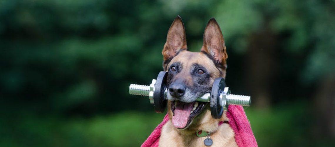 הרצאה לבעלי כלבים